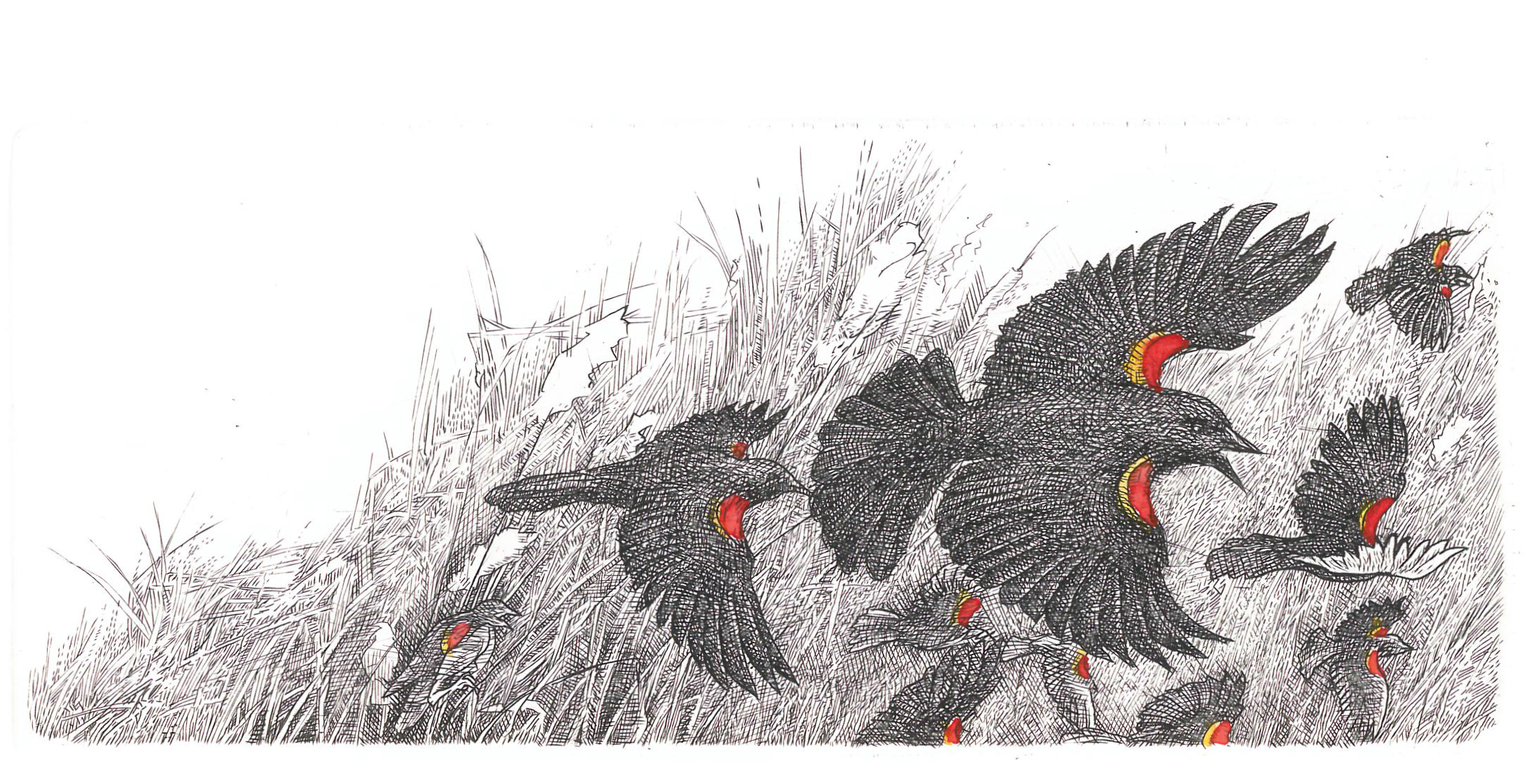 Red-Winged Blackbirds I (2017)