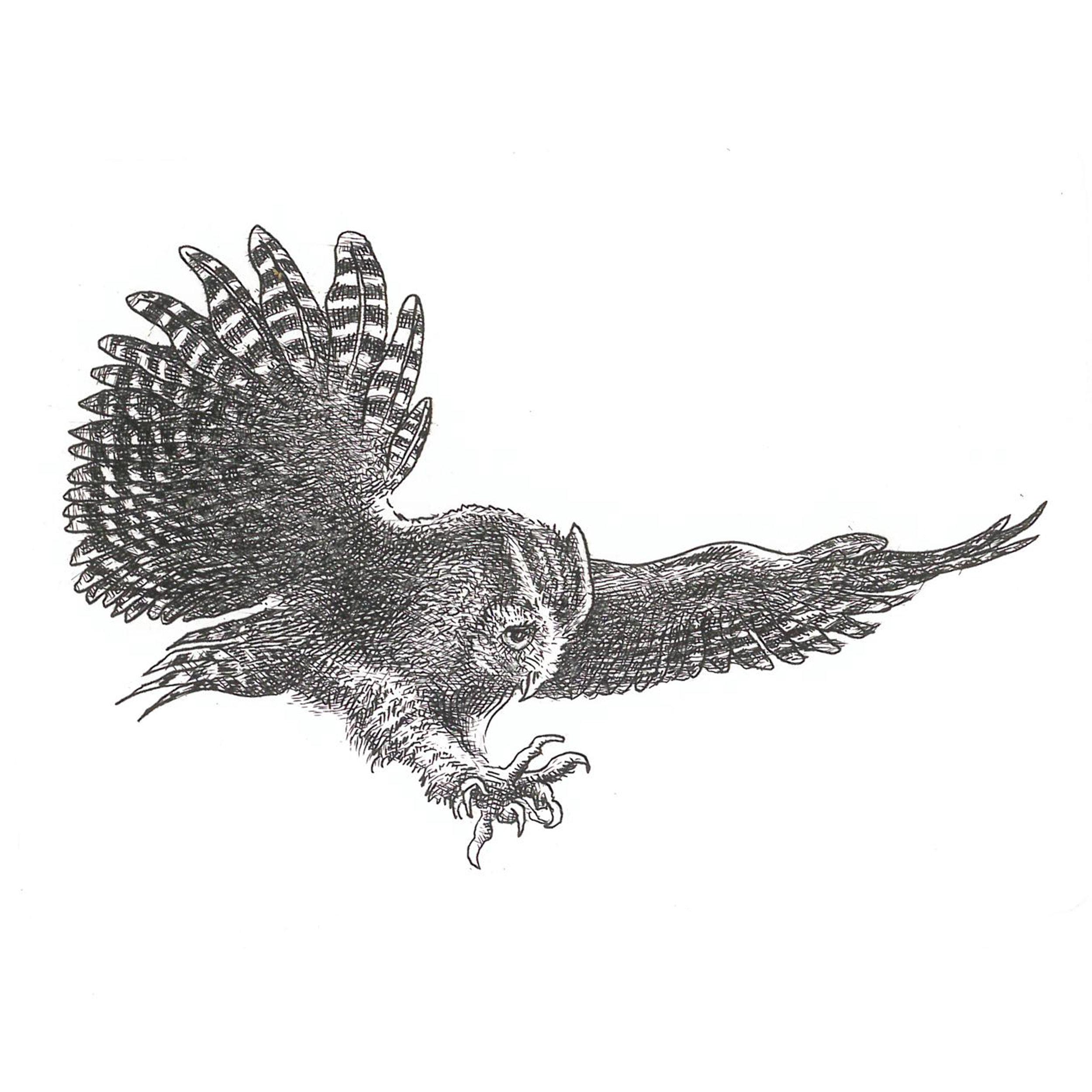 Screech Owl (2017)