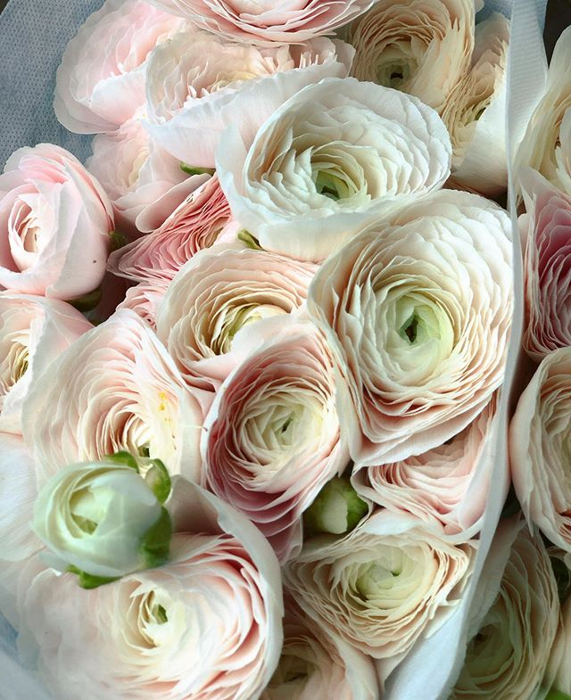 """Be soft. Do not let the world make you hard. Do not let pain make you hate. Do not let bitterness steal your sweetness."" - We are ""blushing"" over these gorgeously feminine ranunculus! - ****************** - #talkbloomstome #wildehoneyblooms #wildehoney #justbloom #bloomloudly #beautyinthebloom #staywildehoney #bloom #saltlakecity #utah #saltlakecityflorists #flowers #floralarrangement #womenentrepreneur #bouquet #wedding #bridalbouquet #flowerhappy #flowerfriends #ranunculus #blush #prettyinpink #feminine"