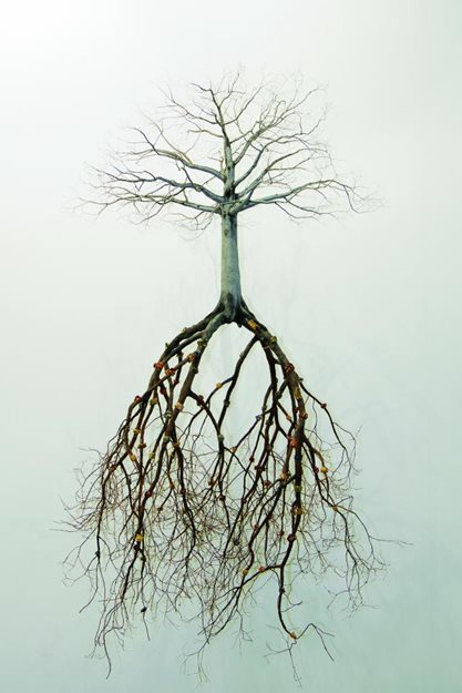 roots-garden-design_10536.jpg