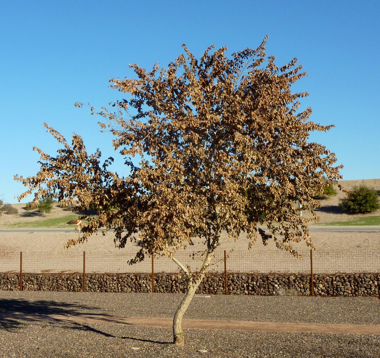 tree-leaves.JPG
