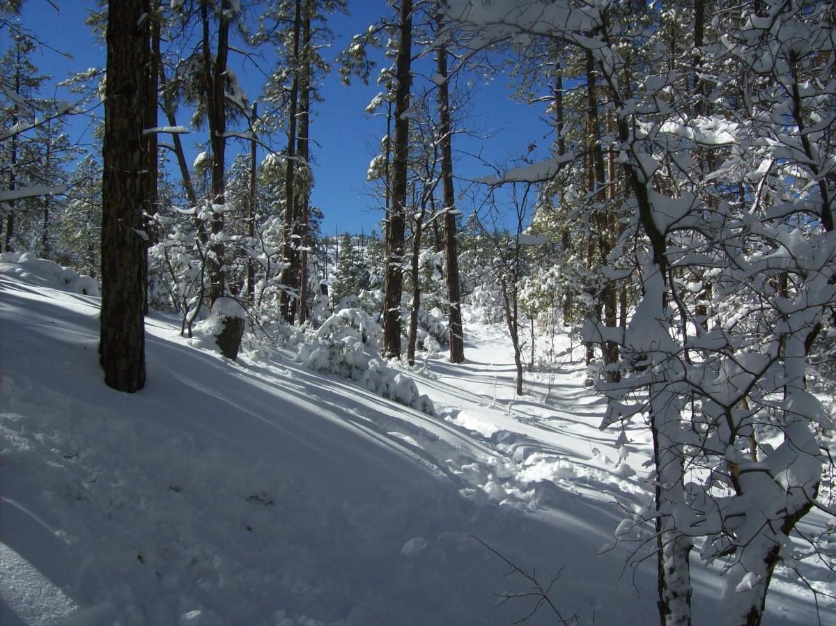 snow_forest.jpg