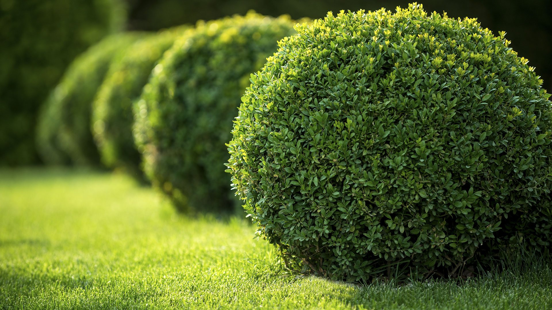 Bushes and Hedges - We treat their trim like its an art