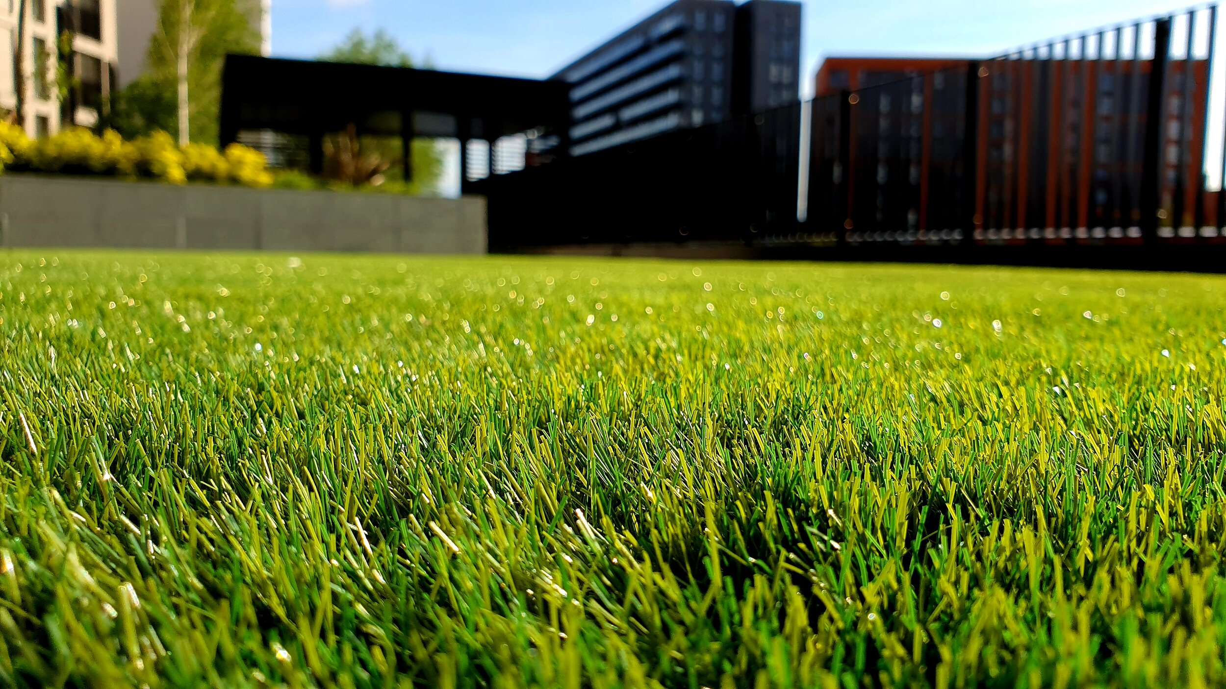 Lawn care and installation - From Kentucky Blue to Rye Grass, we do it all