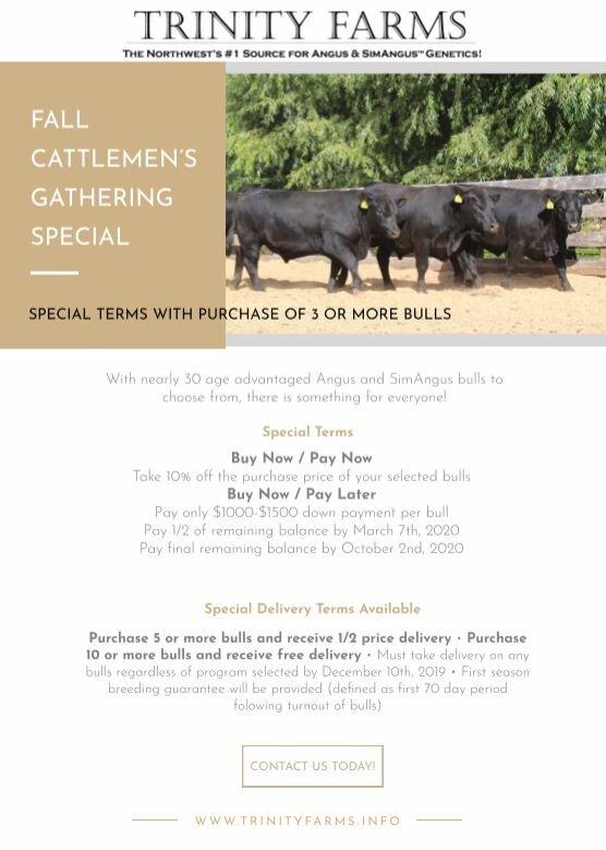 2019 Bull Offering flyer_capture.JPG