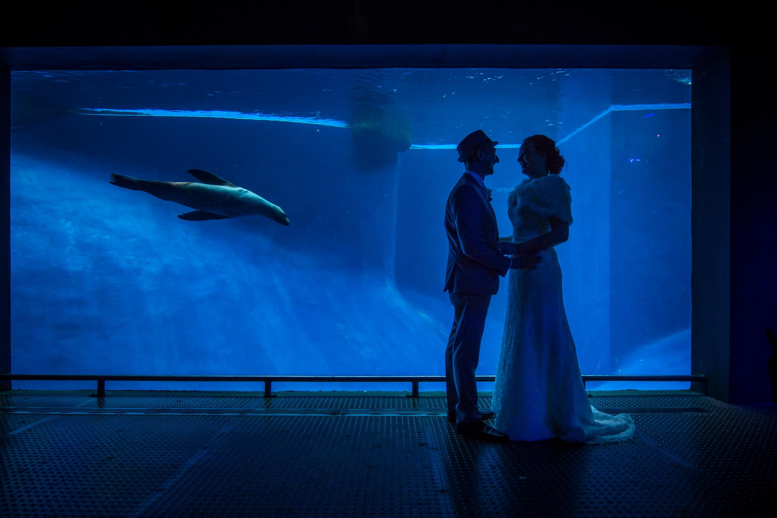 Anna & Joel - wedding @ Melbourne ZOO