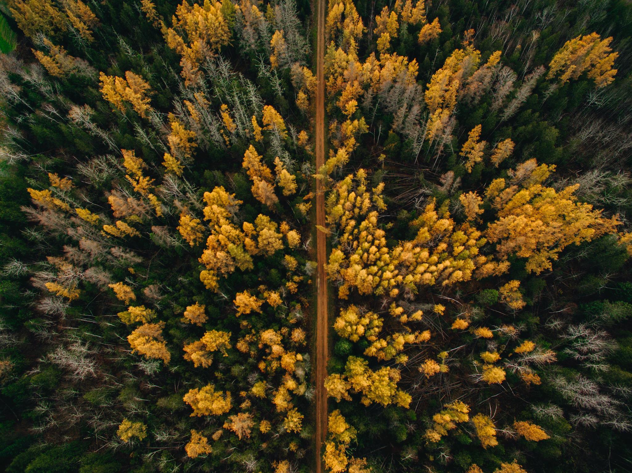 Golden Trail.jpg