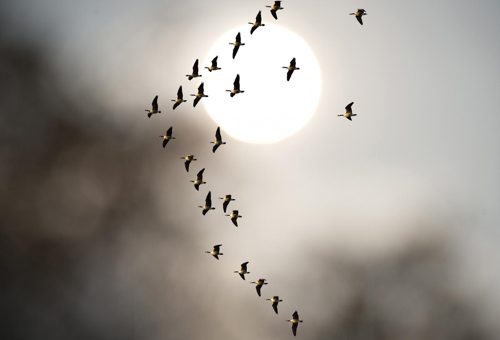 _DSC7910_birds_modc.jpg