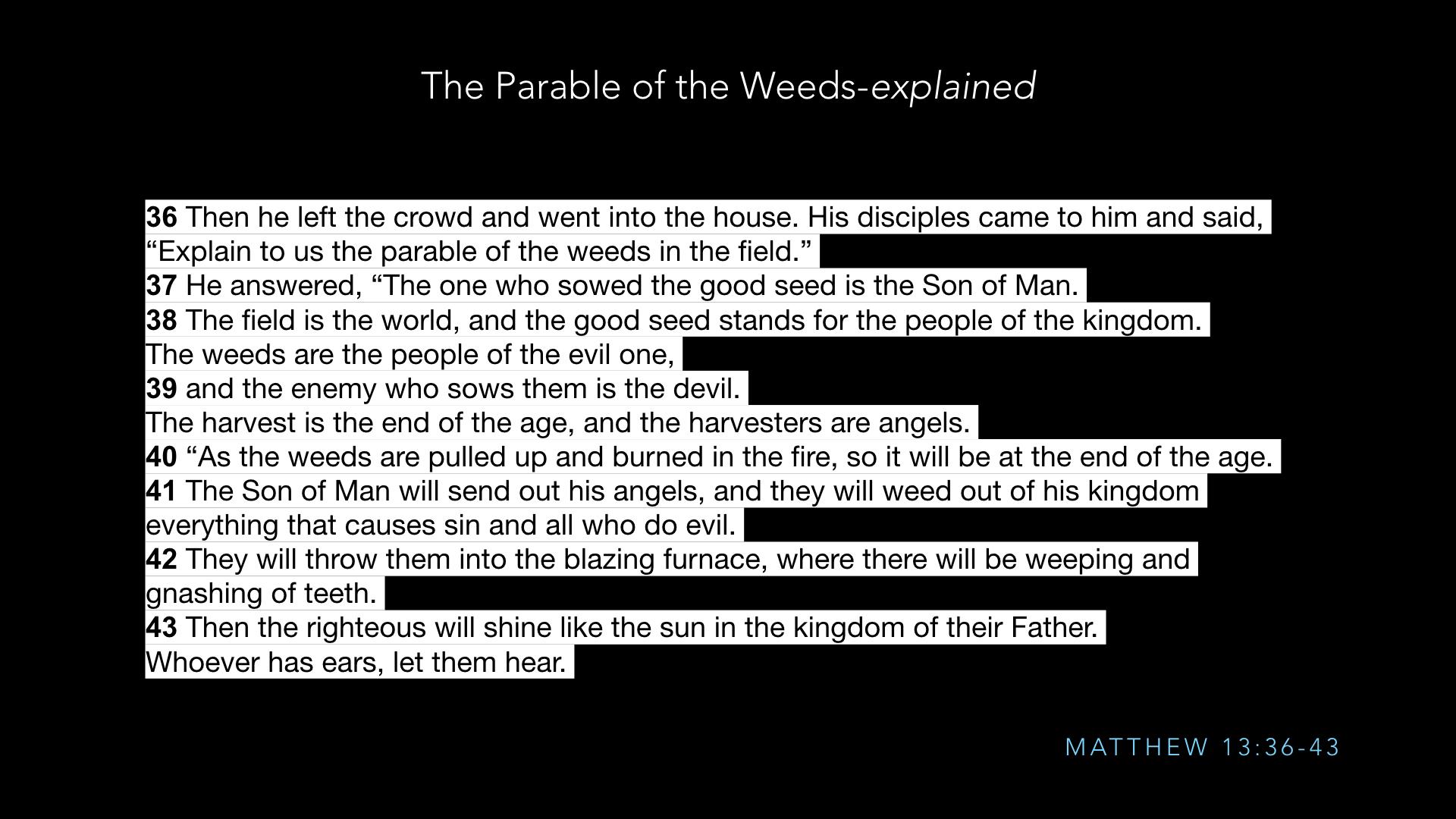 Parables - Weeds - SV - Sept19.008.jpeg
