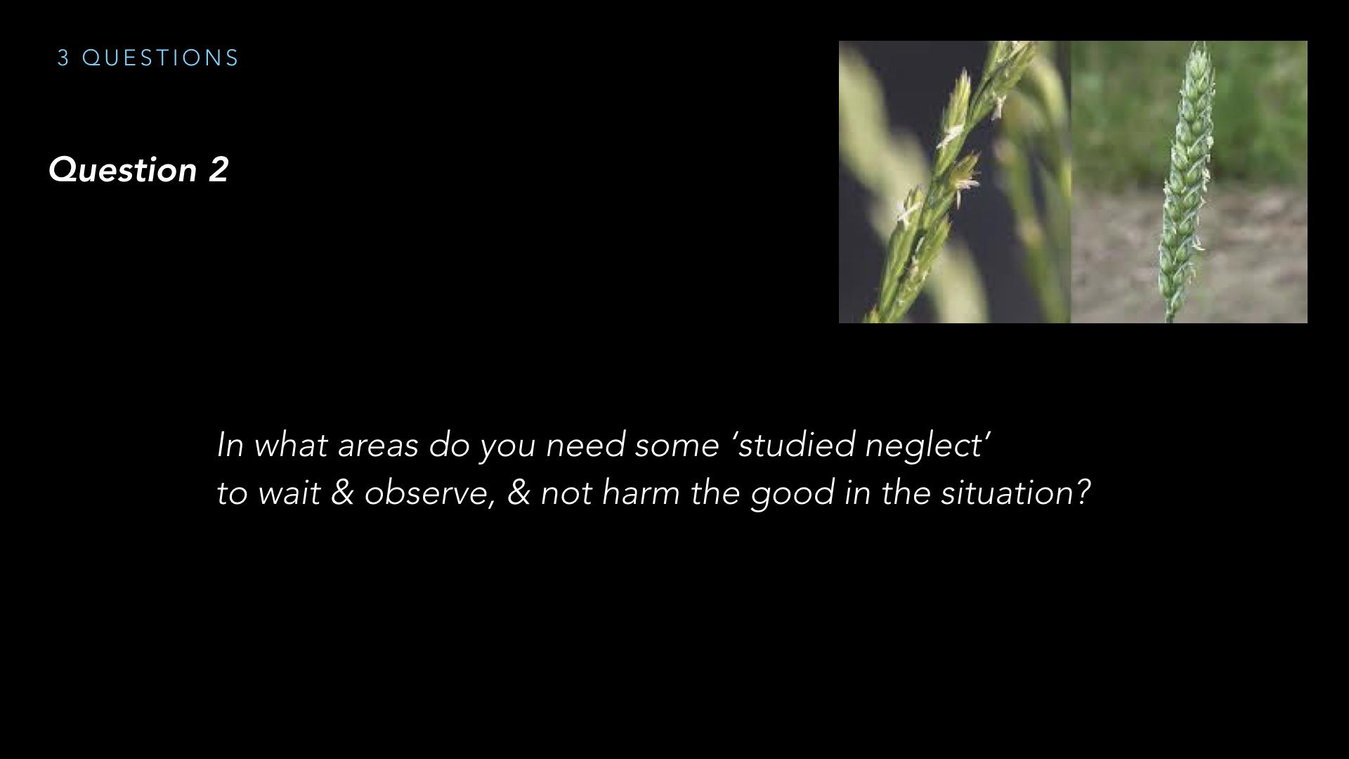 Parables - Weeds - SV - Sept19.015.jpeg