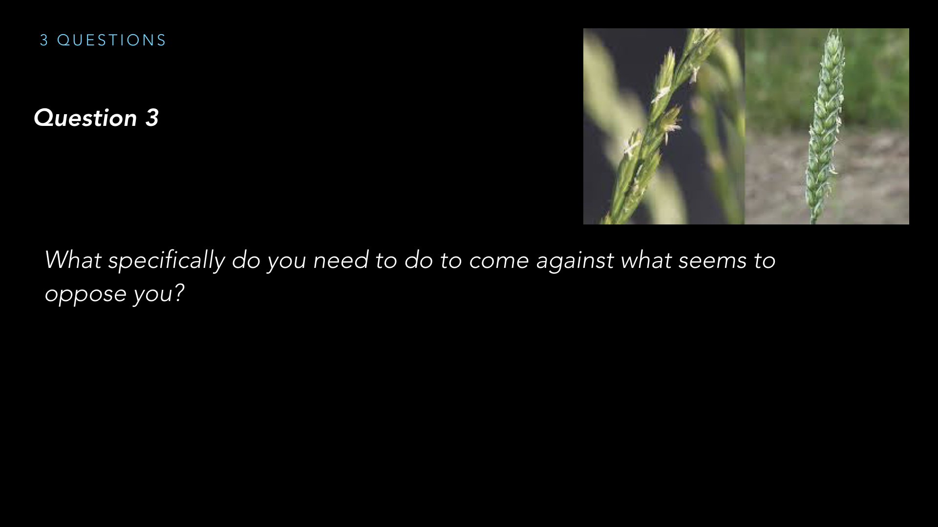 Parables - Weeds - SV - Sept19.016.jpeg