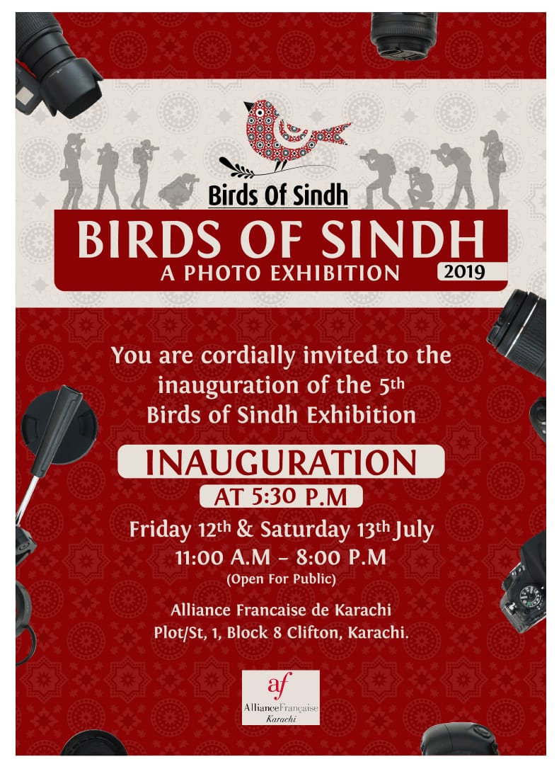 12-13 July - Birds of Sindh.jpg