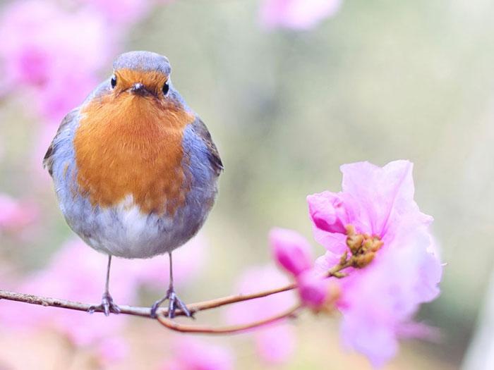 EARLY BIRD BONUS - 5% OFFBOOK 6 MONTHS IN ADVANCE