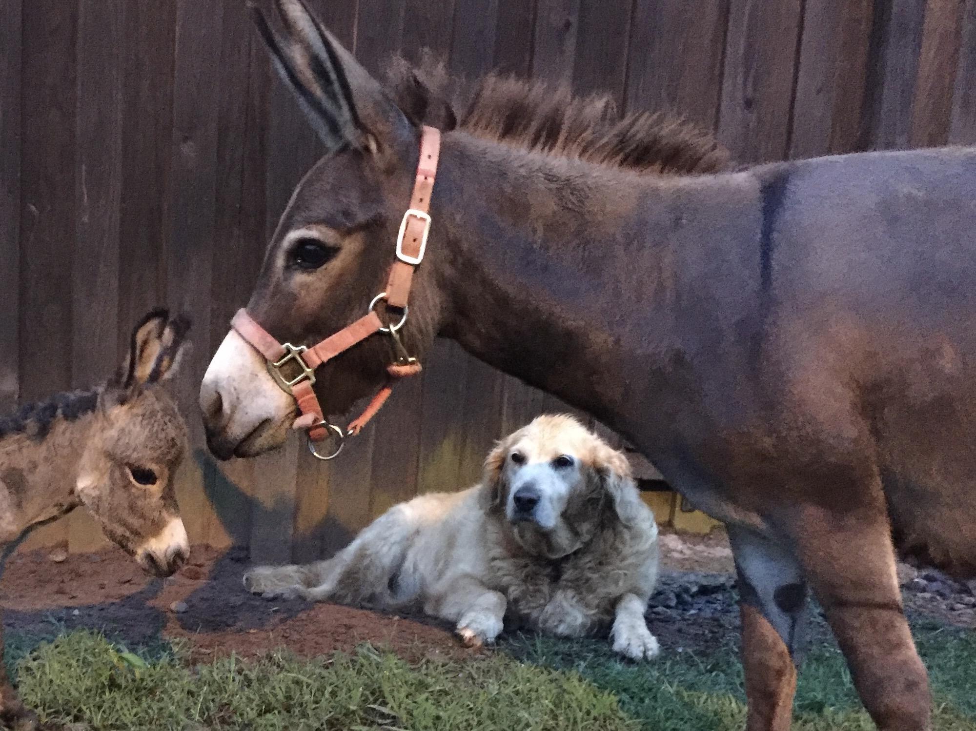 donkey - Copy - Copy - Copy - Copy.jpg