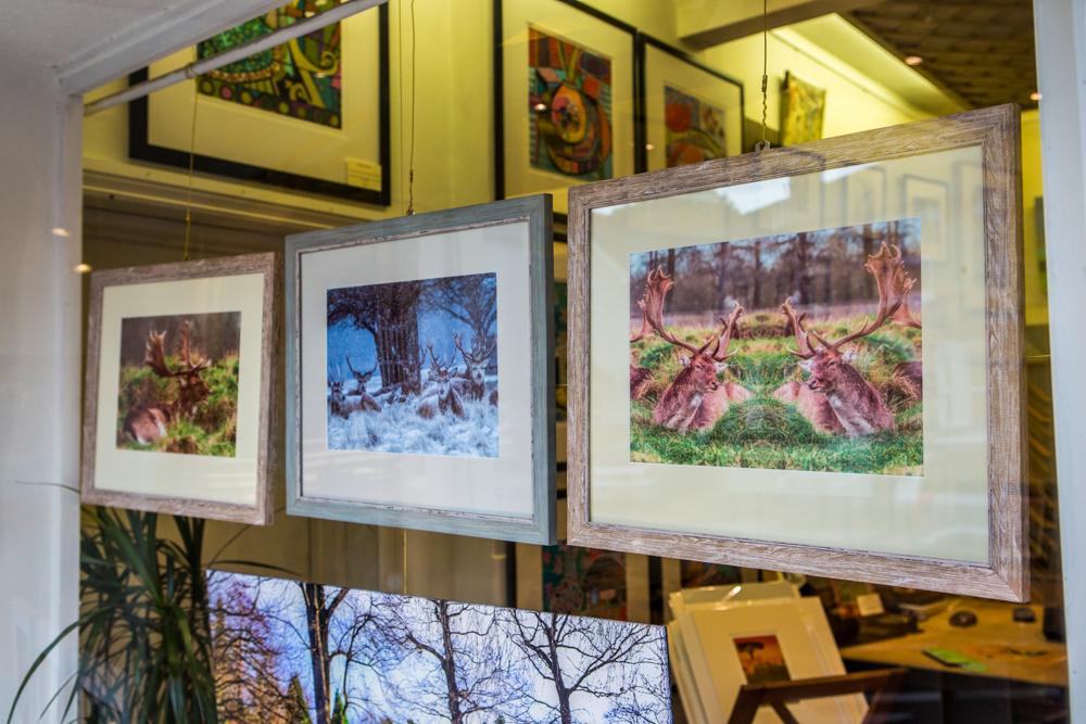 The Deer Whisperers, Leigh Gallery Window Display by Cristina Schek (124).jpg