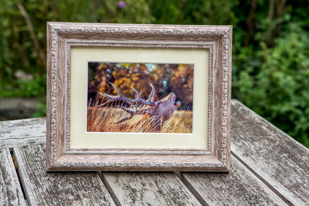 Autumnal Deer by Cristina Schek