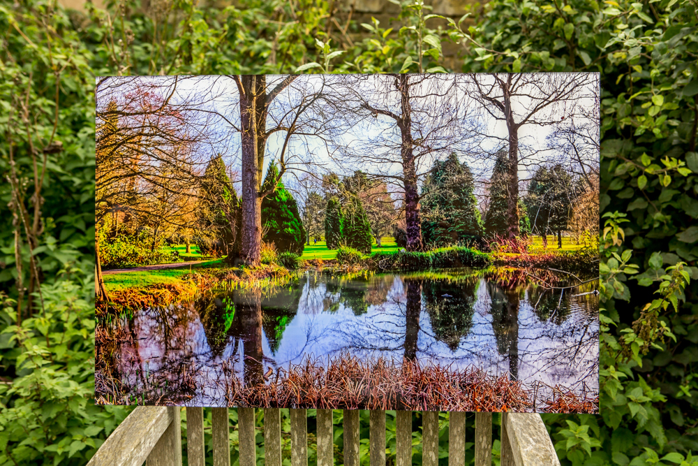 'Bushy Park' by Leigh Warnick. Perspex face mounted print. 60cm x 34cm .