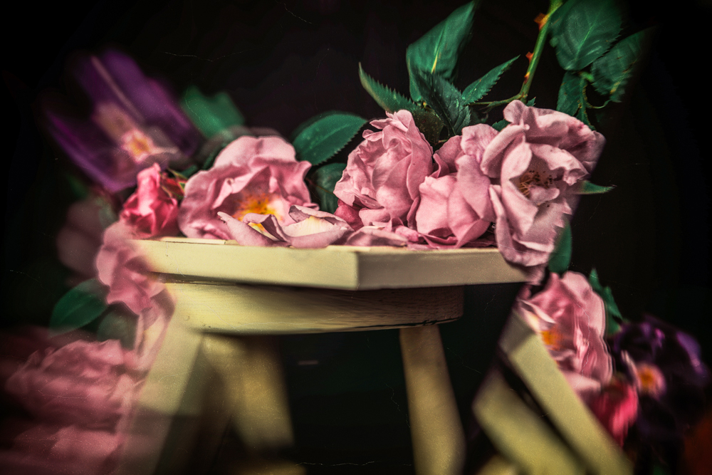 The Legendary Pink Roses of Cairo @ Golden Age Hollywood Studios 2019, by Cristina Schek