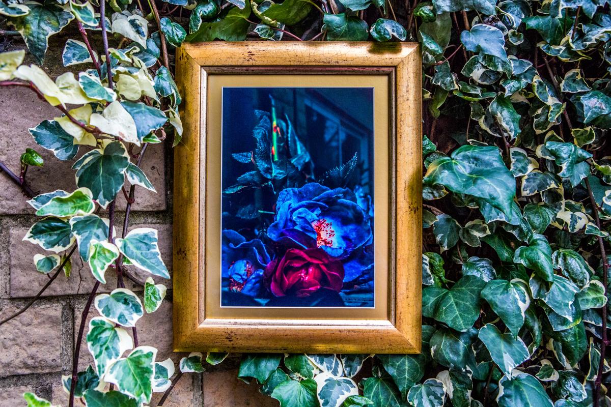 La Vie En Roses Series by Cristina Schek (33).jpg