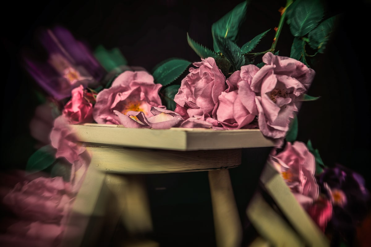 The Legendary Pink Roses of Cairo @ Golden Age Hollywood Studios