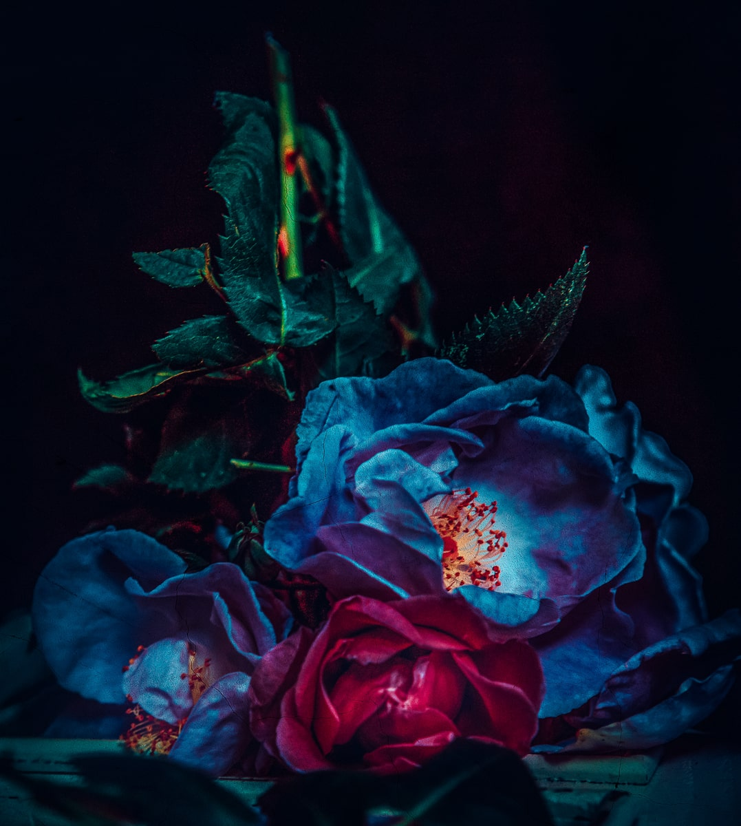 Blue Rose I @ Twin Peaks Studios