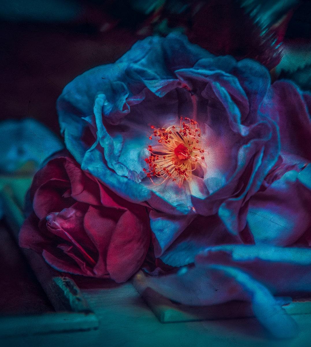 Blue Rose II @ Twin Peaks Studios