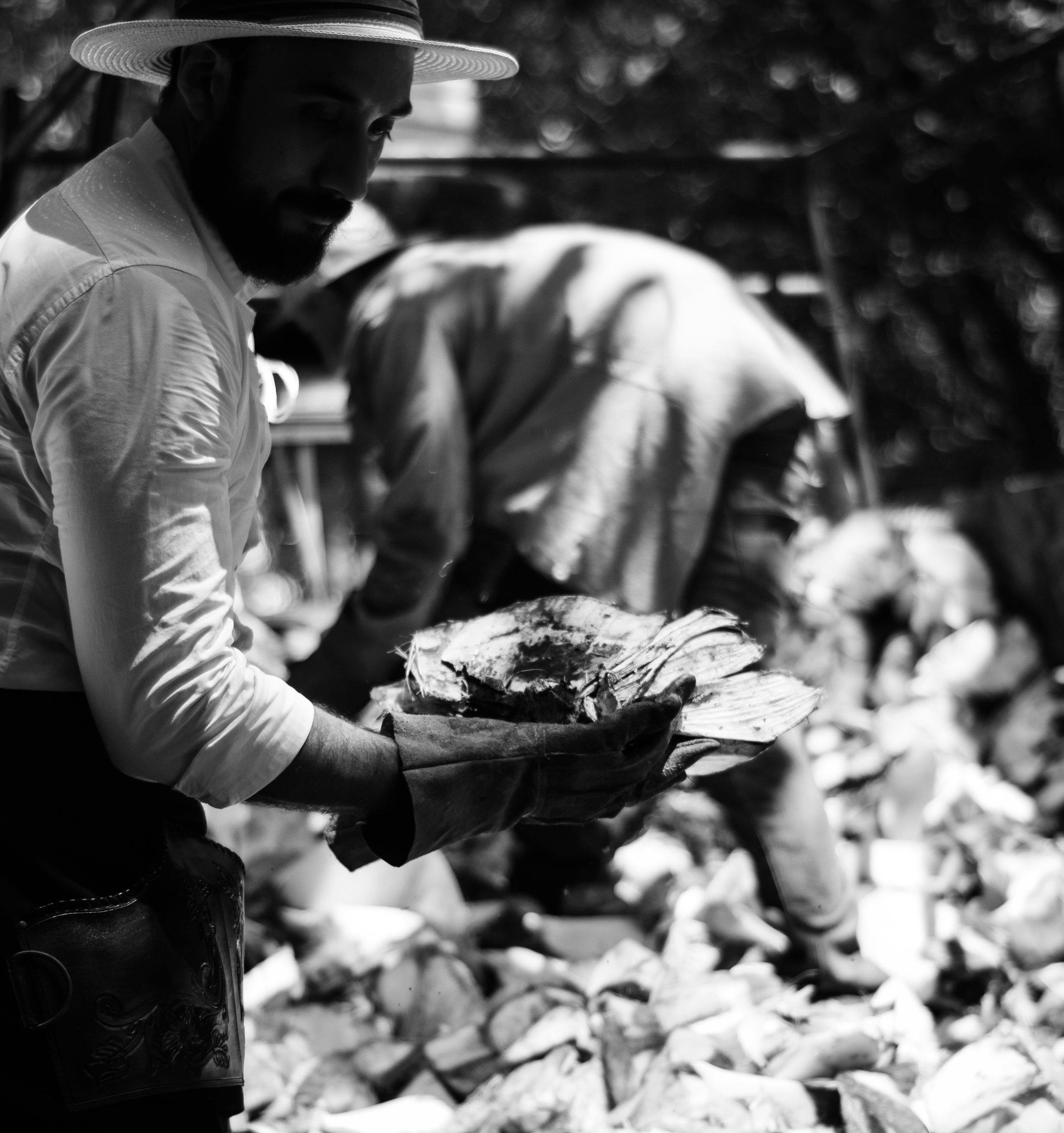 Harvesting Agave Ninfa Raicilla
