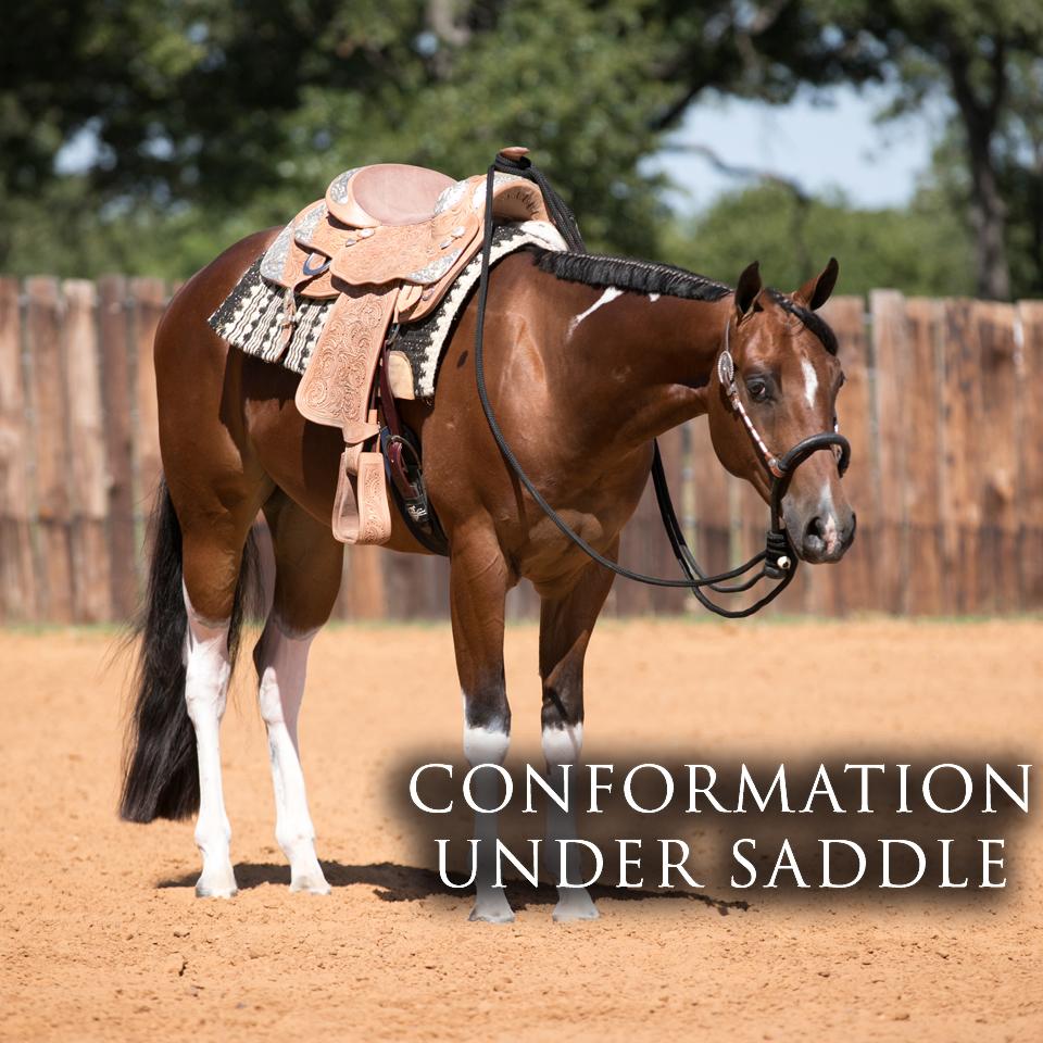 Conformation Under Saddle