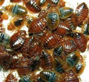 bed bug treatment options