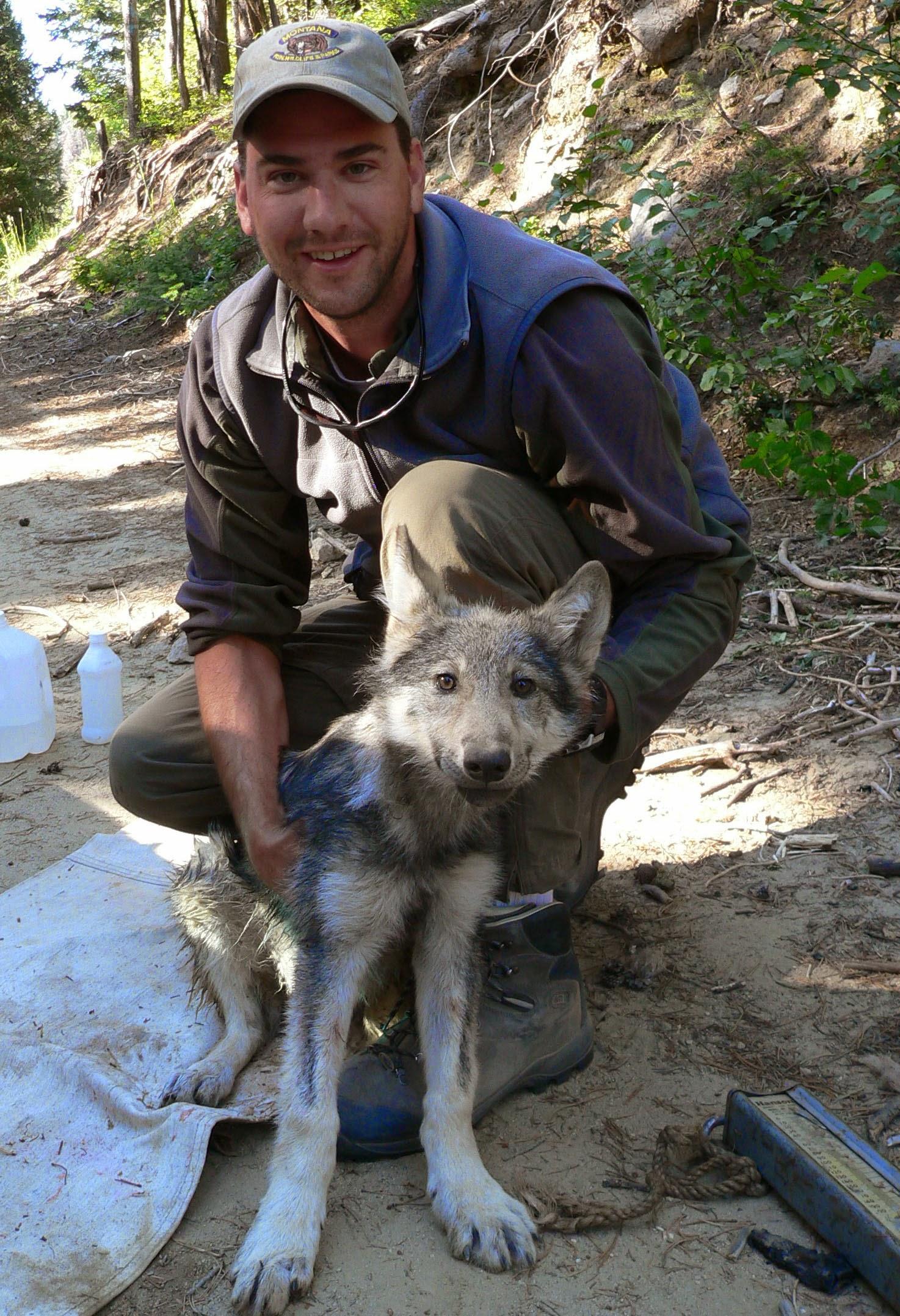 TyandwolfpupfemaleEFB_edited-1.jpg