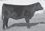 ONeills Forever Eraline 86  Daughter Owned by Maifeld, Inc., IA
