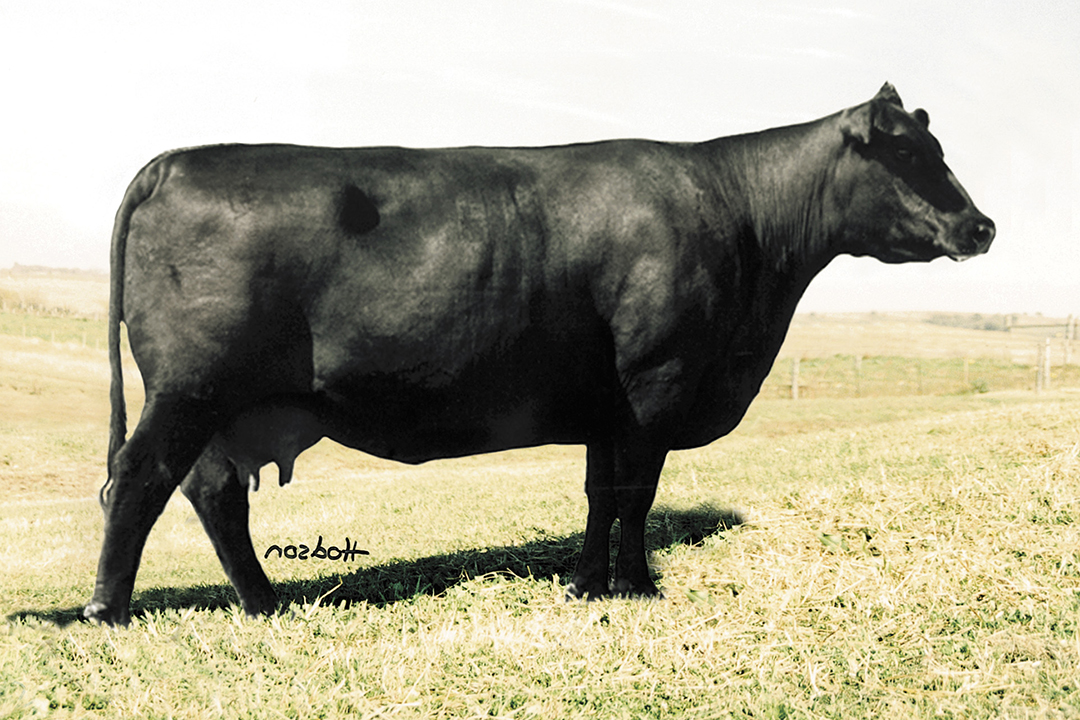 Royale Bardolier Forever 783  Sired by Baldridge Oscar and her dam by Candolier Forever 376