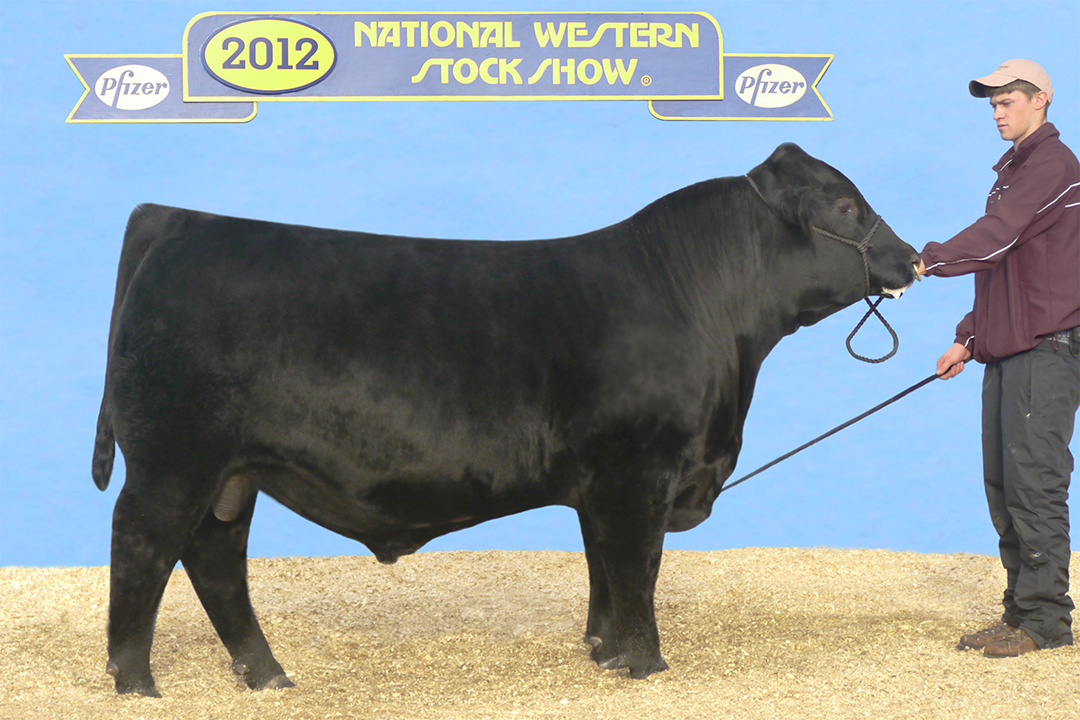 ONeills Expedition 0245  Full Brother Owned by Ted Bockenstadt, IA
