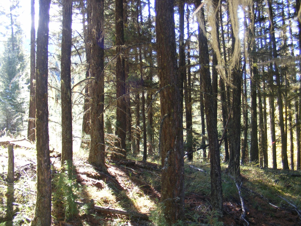 Gibbs Creek Forest Before