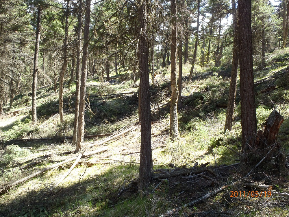 Gibbs Creek Forest After