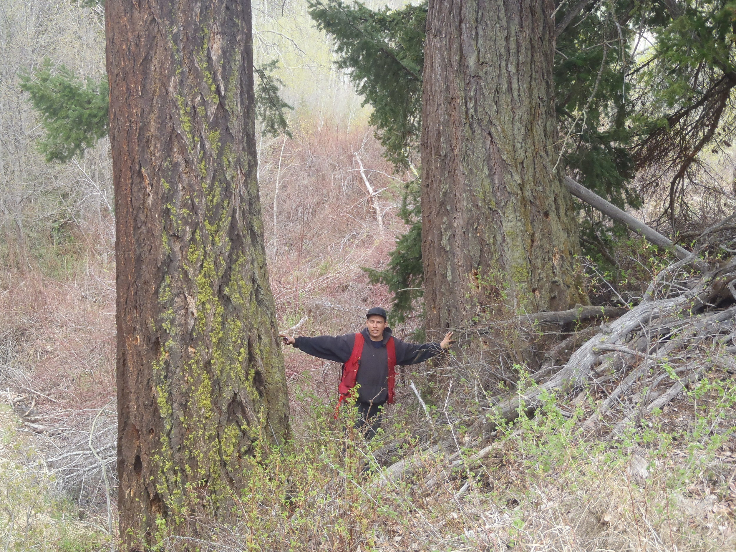 Doug and Old Growth Trees.JPG