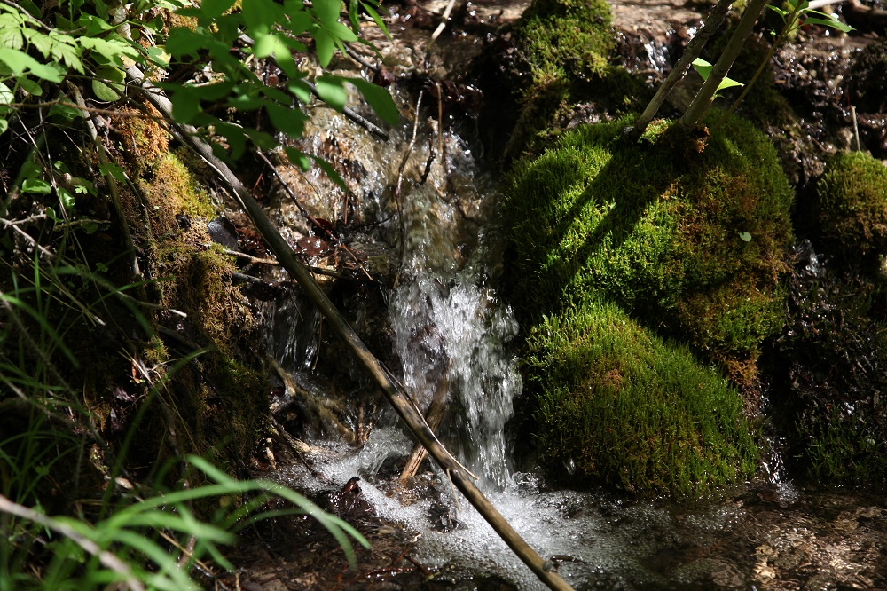 Restore water quality, quantity and timing of flow through Xaxli'p Survival Territory.