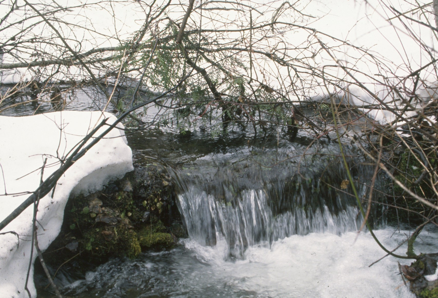 Water is life – produced by whole, intact forested watersheds.