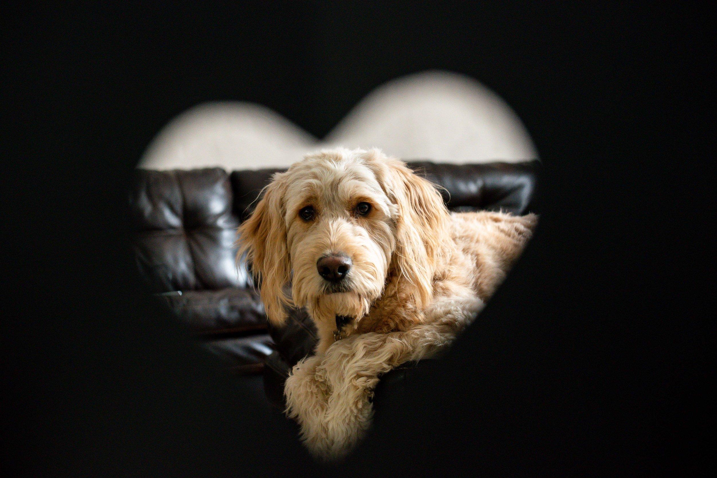 Goldendoodle heart frame