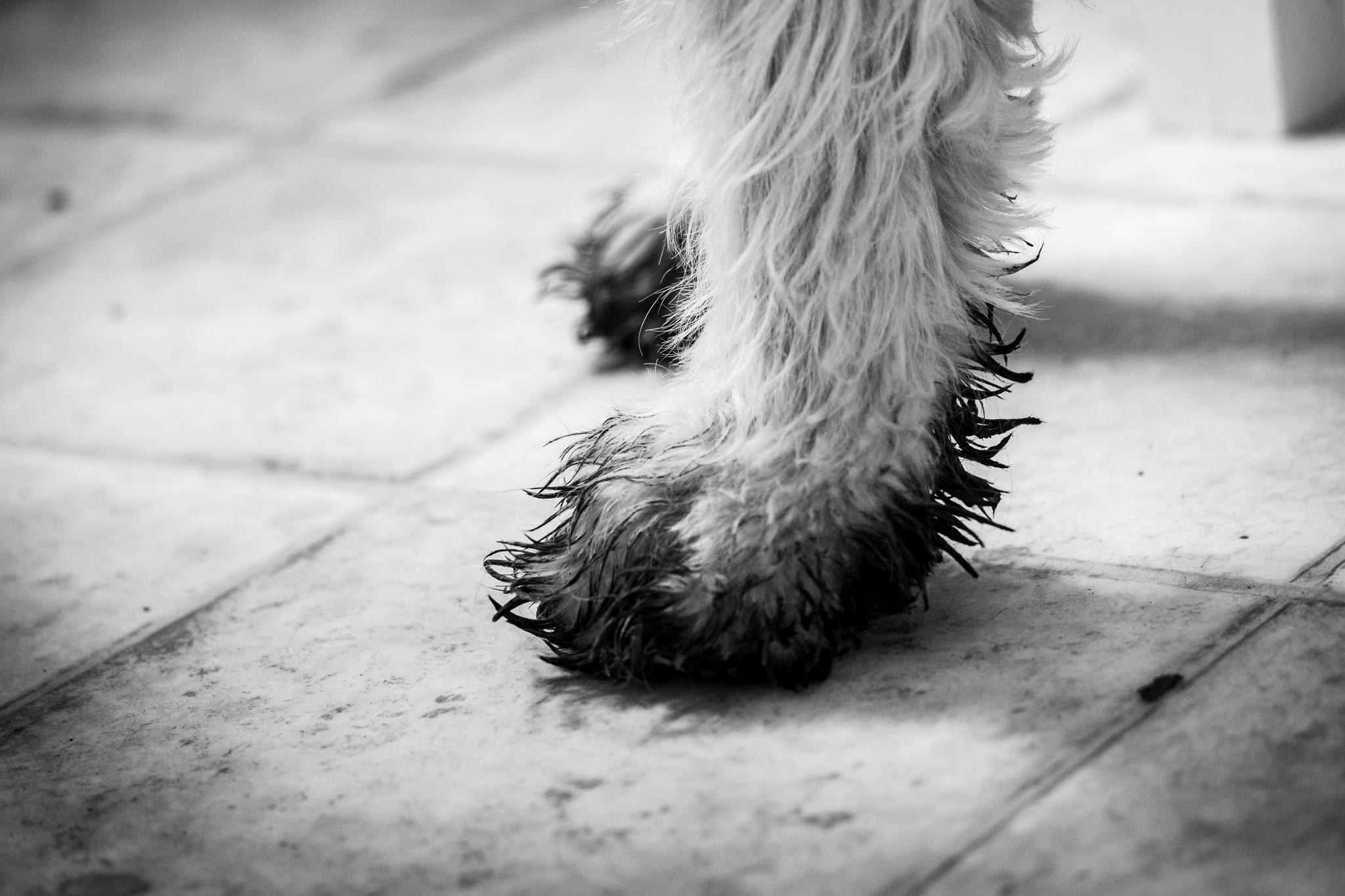 muddy dog feet