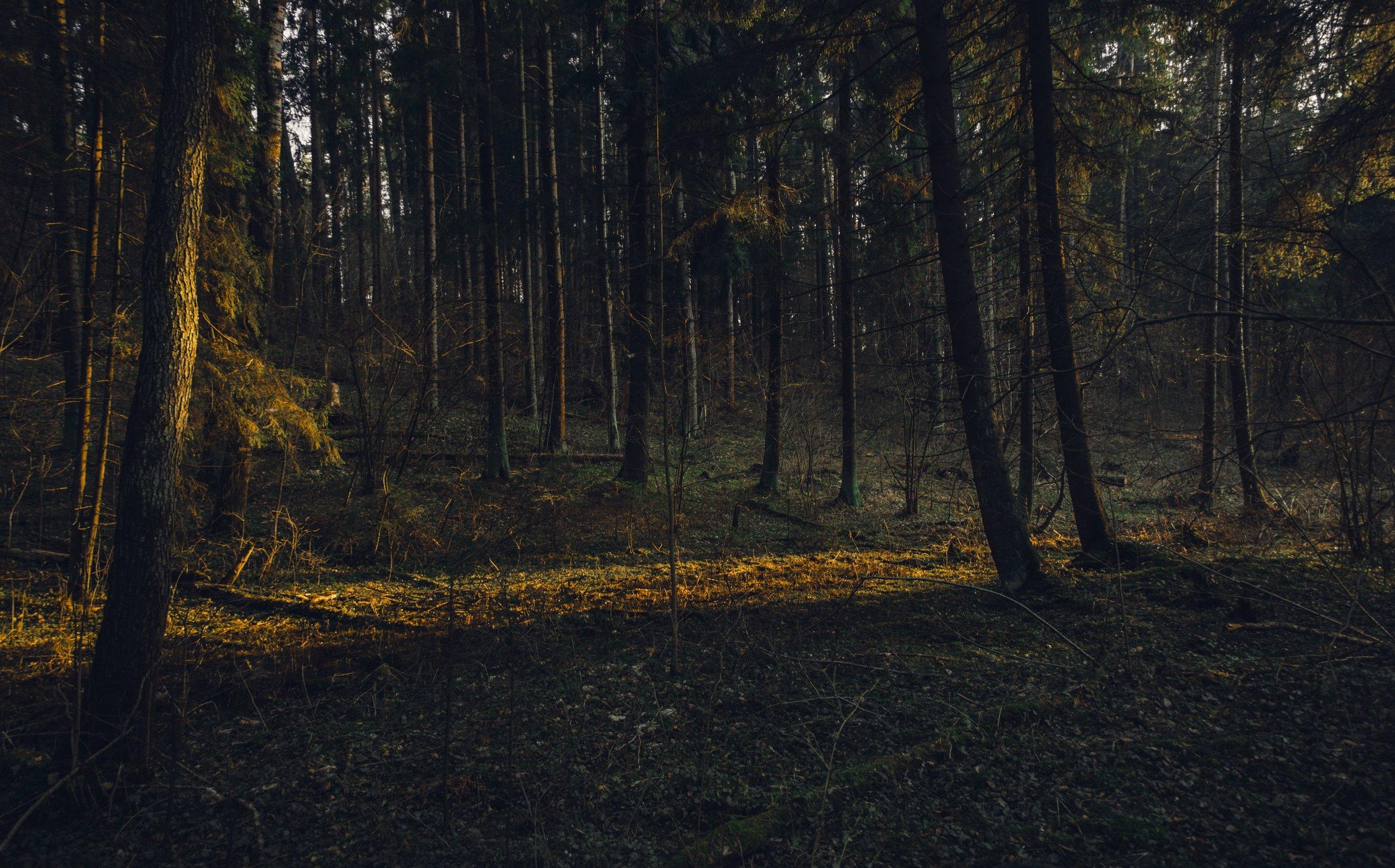branches-dark-green-daylight-954739.jpg