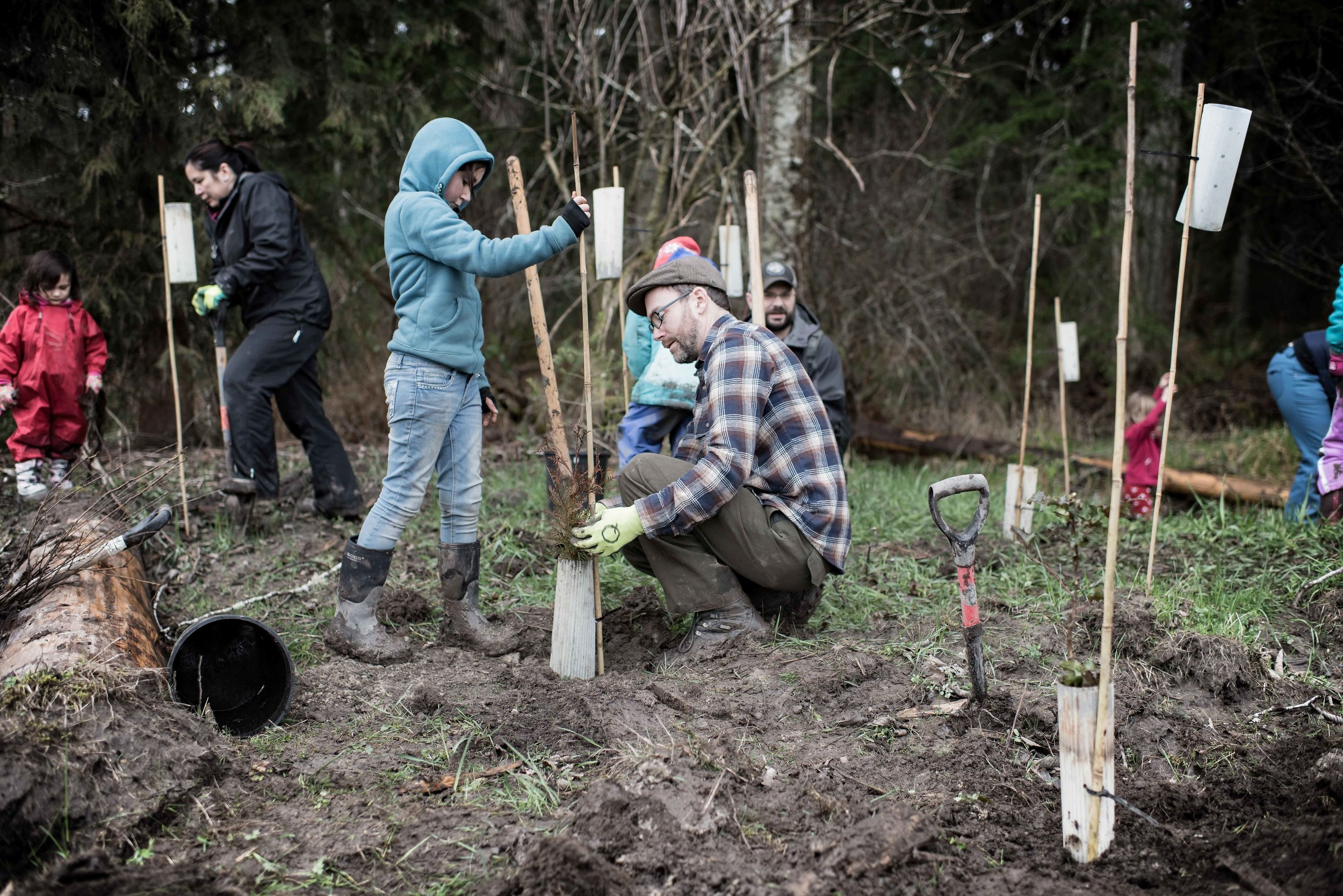 Justin Lake a teacher from Quilcene school plants trees with his daughter Photo_Credit_Eric Rabena.jpg