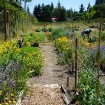 Swan Farm Hadlock 2.jpg