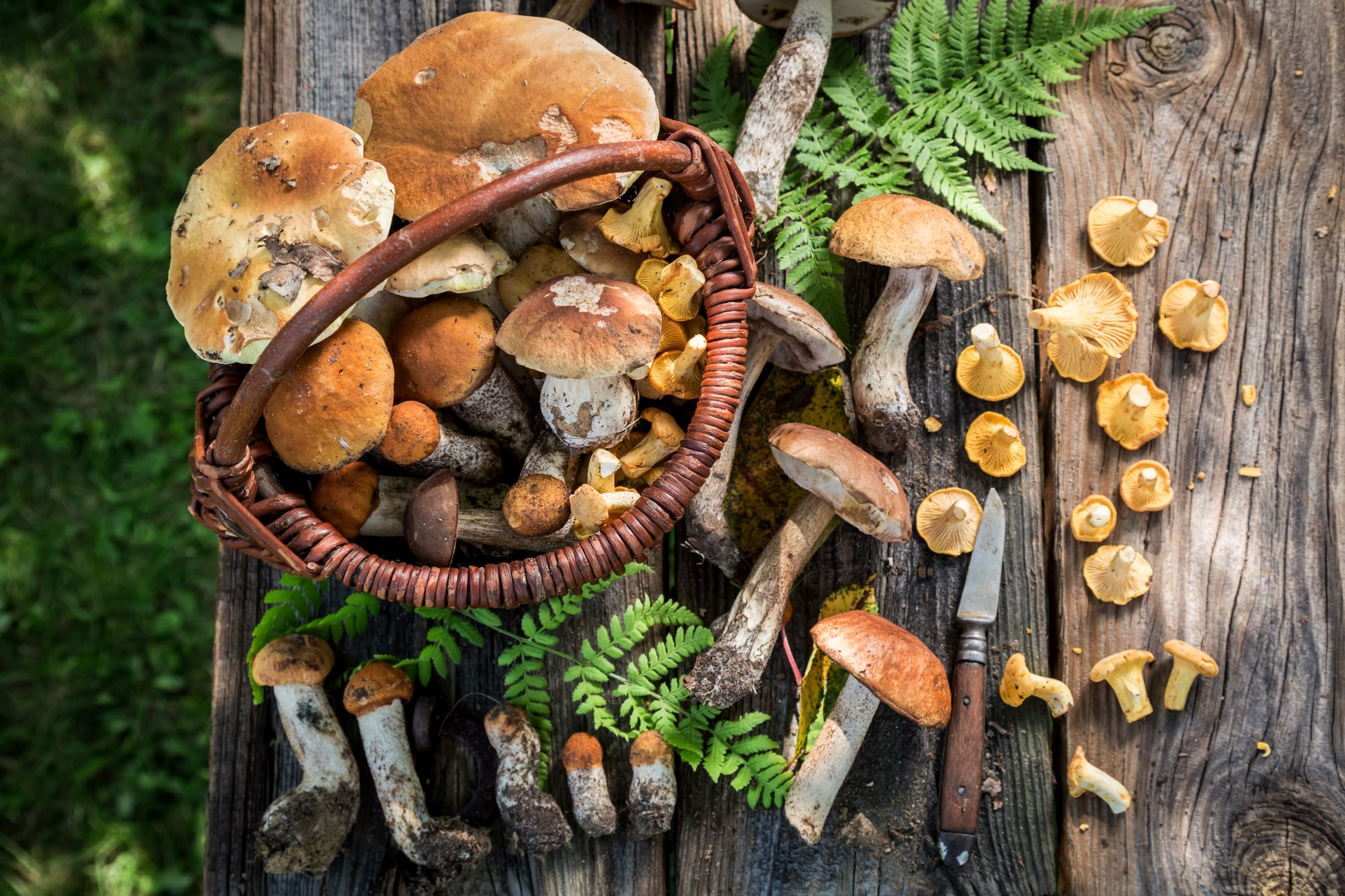 mushrooms in basket AdobeStock_169948003 smaller.jpeg