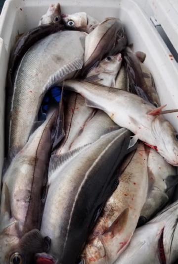 tote fish.png