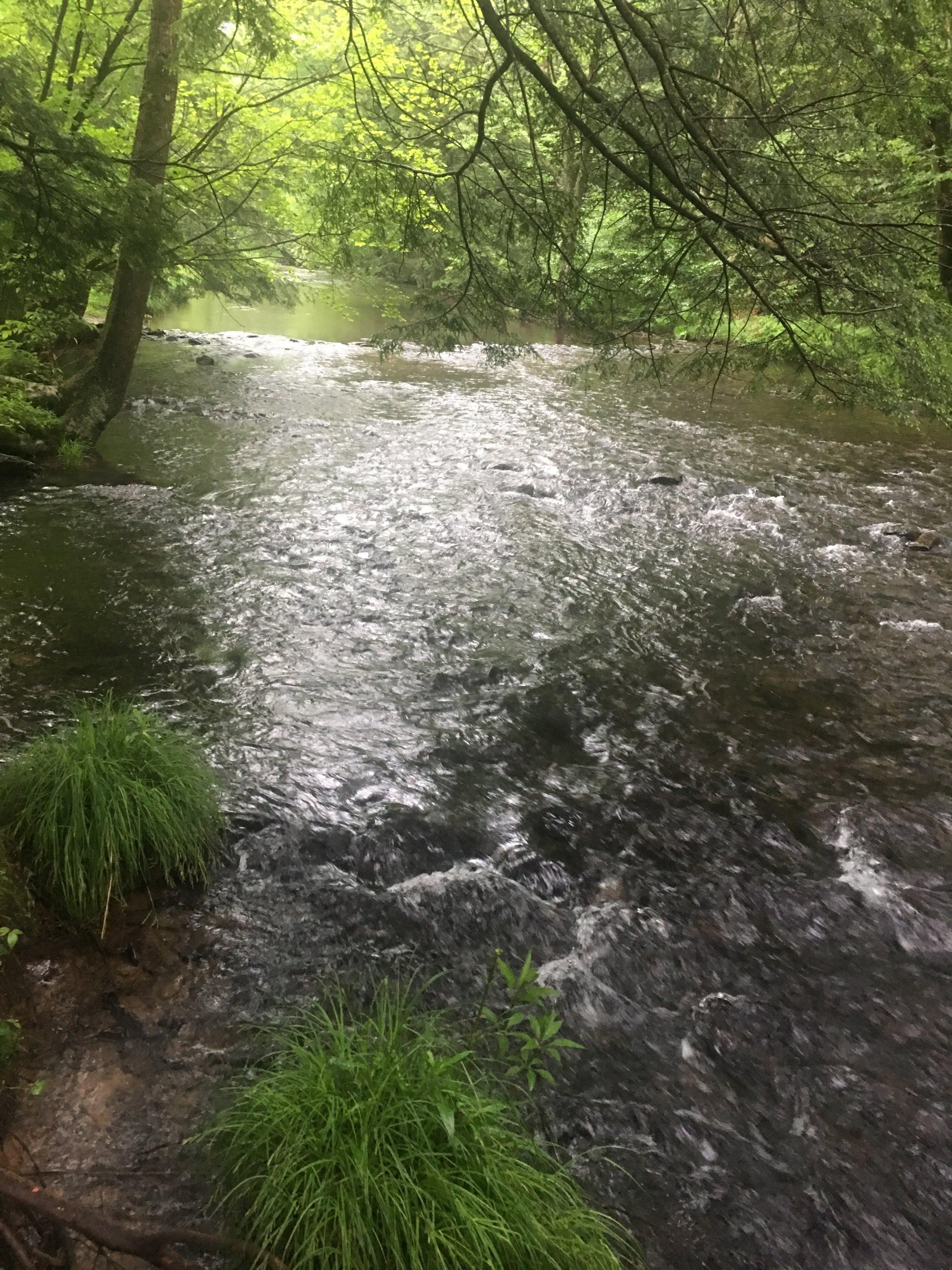 Creek.Potter.County.JPG