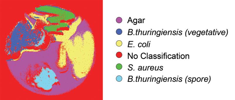hoax bacteria classification