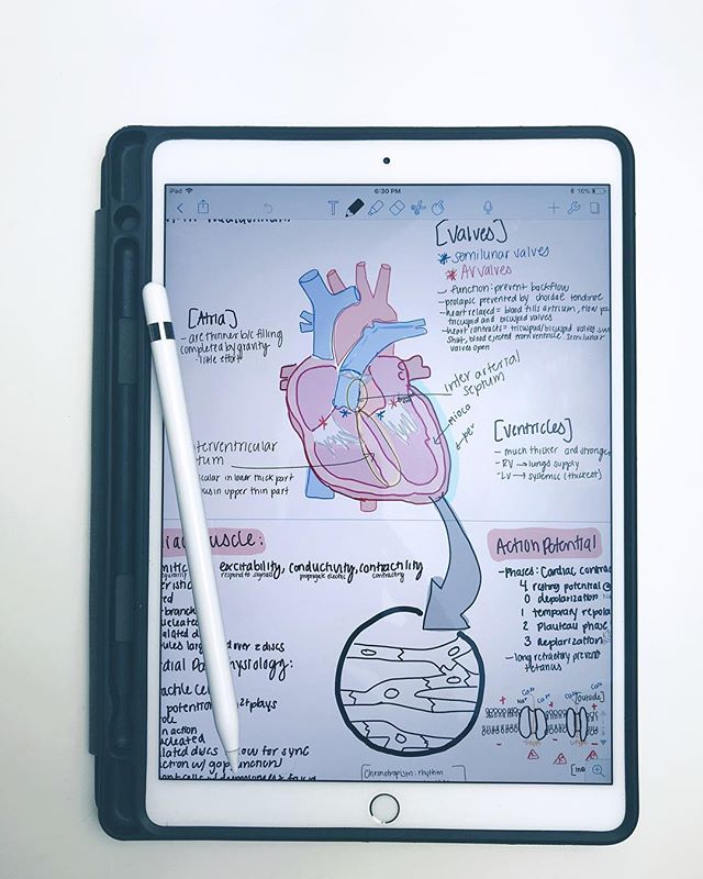 Well hello Cardiology 👋🏼 • • • This cardio block is giving me a run for my money when it comes to information that never stops! Despite the long hours of studying and studying I can say that I'm still really loving all things heart ❤️ • • • After the past two weeks of long lectures, many many quizzes, and EKGs that just seem to blend together, I'm taking this Friday night to treat myself to some wine and home made pizza! What are your plans tonight? 🍷