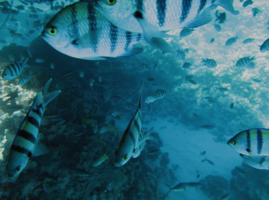 """International Business Times, """"Coral reef conservation solution? Damaged coral reefs surprise experts with 15 'bright spots' jam-packed with fish"""""""
