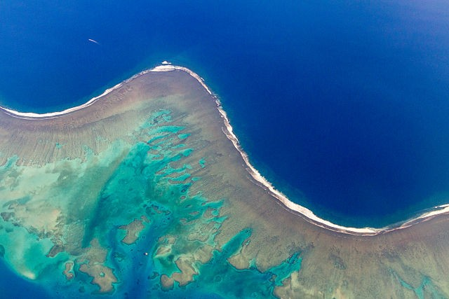 "The Science Times, ""Biologist Unlocks the Mystery Behind Bright Blue Halos Around Coral Reefs"""